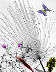 chamaerops azalea