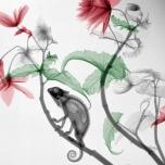 chameleon begonia