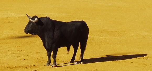 Toro-elPuerto (1)