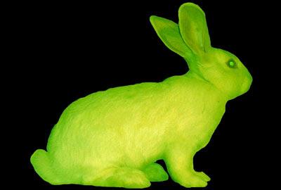 Alba fue una coneja a la que se le implantó un el gen de la proteína verde fluorescente (GFP) que se encuentra en alguna medusas. Bajo la luz azul, Alba se iluminaba.